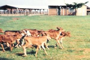 Fazenda 1992