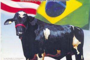 Damião Bellwood FZD