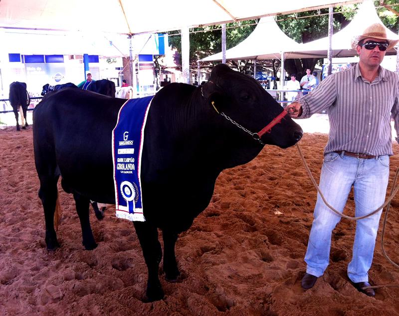 Grande Campeão 5/8 e 1º Lugar CAMPEONATO JUNIOR MAIOR 5/8
